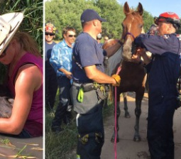 Firefighters Rescue Horse That Fell in Swamp and Couldn't Get Out: 'She Was Exhausted'