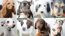 Police release photos of 48 stolen dogs to help reunite animals with owners