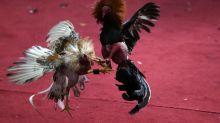 El maltrato animal en la mira: adiós a los circos, a los zoológicos de contacto y a los sacrificios religiosos