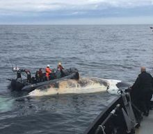 Marine Scientists Fear For Right Whales After Unprecedented Deaths