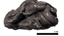"""Un """"chicle"""" de hace 5,700 años revela el rostro y otros increíbles datos de la chica que lo mascó"""