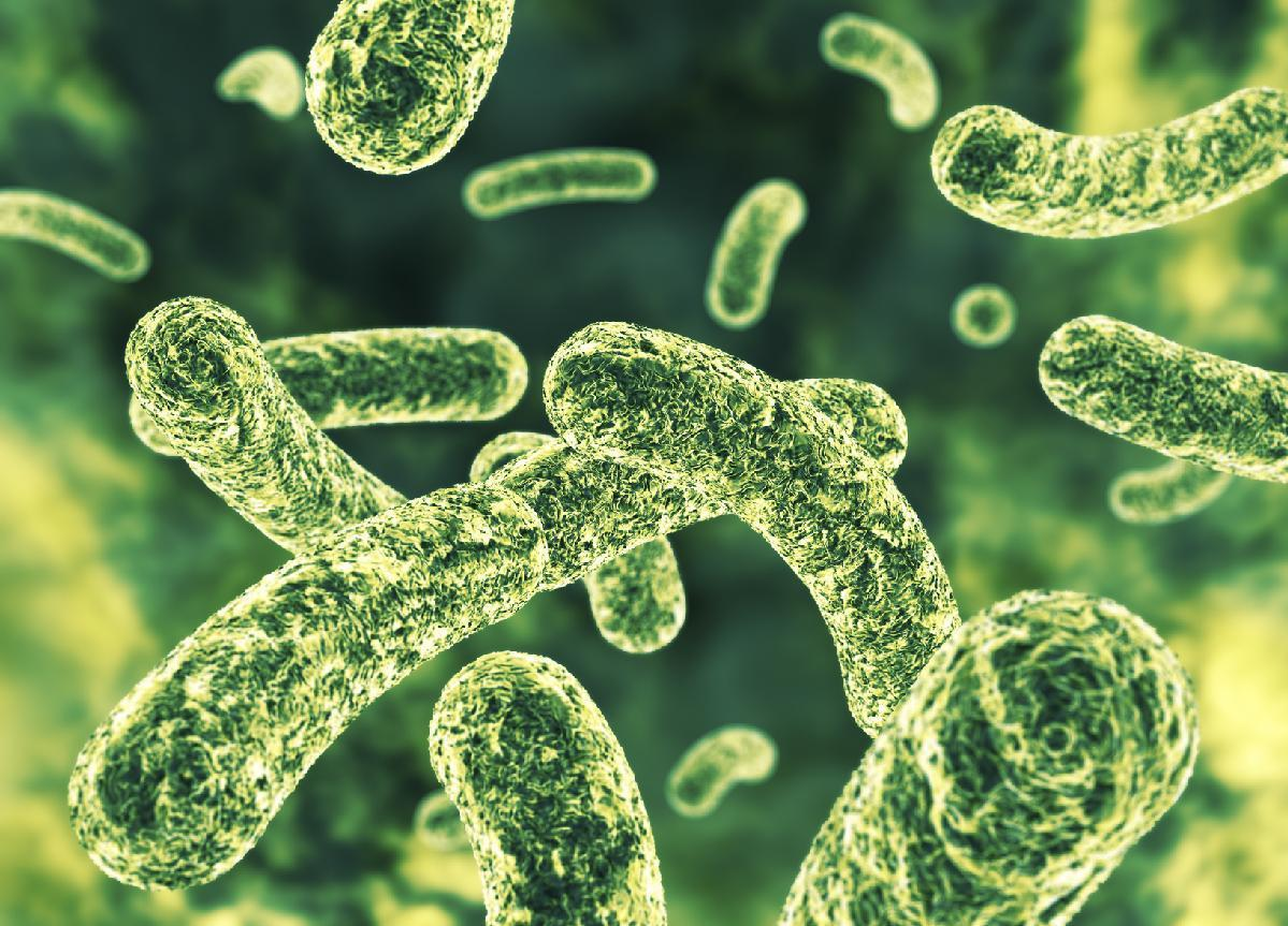 Artificial intelligence helps researchers find new antibiotics