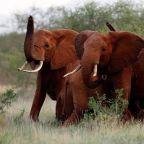 Ellen DeGeneres: 'Donald Trump is encouraging Americans to kill elephants'