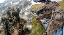Ice Age Cave Bear Remains Have Been Found Perfectly Preserved in Arctic Russia