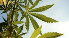 Softness in Beer Hurt Alcohol Stocks, Can Cannabis Change Fate?