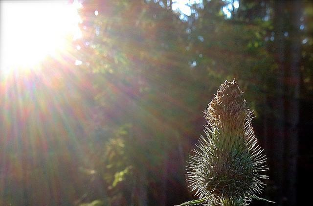 Flickr Find: Even an iPhone 4s can take stunning photos