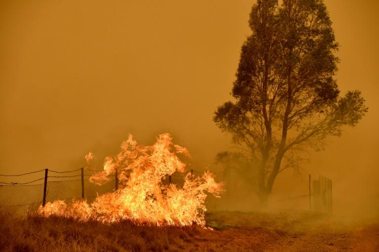 The Australian bushfires raged for months, devastating tens of thousands of hectares (AFP Photo/PETER PARKS)