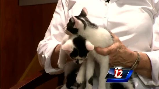 Pet of the Week: Mickey and Mookey