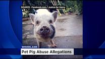 Woodland Woman Claims Neighbors Planned To Butcher Pet Pig