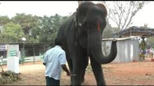 Elephant plays the harmonica