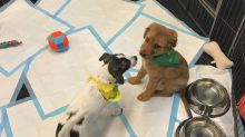 On the set of Puppy Bowl XIV