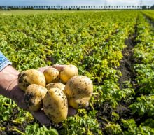Summer drought may shrink supplies of French spuds