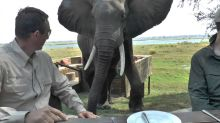 No RSVP — Elephant Crashes Dinner Party at African Safari Park