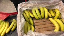 'Cocaine bananas' accidentally shipped to grocers in bungled drug deal