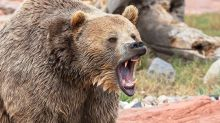 Bears Send Stock Market Spinning Lower As Recession Fears Rise