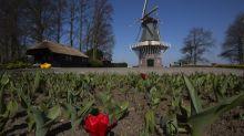 Tulpen für die Tonne: Blumen landen massenweise im Müll