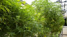 Arcadia signs up ag companies to sell its industrial hemp seeds