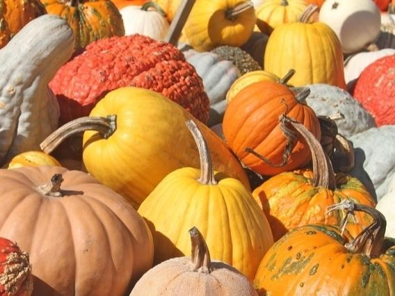 Where are the best places to get a pumpkin in New Hampshire? Leave a note in the comment section.