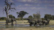 Le Zimbabwe interdit une mine de charbon dans la plus grande réserve naturelle du pays