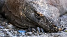 Indonesian activists slam 'Jurassic Park' plan for Komodo dragon habitat