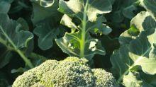 BroccoLeaf: Warum Brokkoli-Blätter das neue Superfood sind
