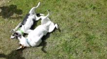 Irmãos, cães se reencontram 10 anos após terem sido separados