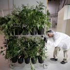 Canopy Growth and Acreage shareholders to vote on acquisition deal on June 19