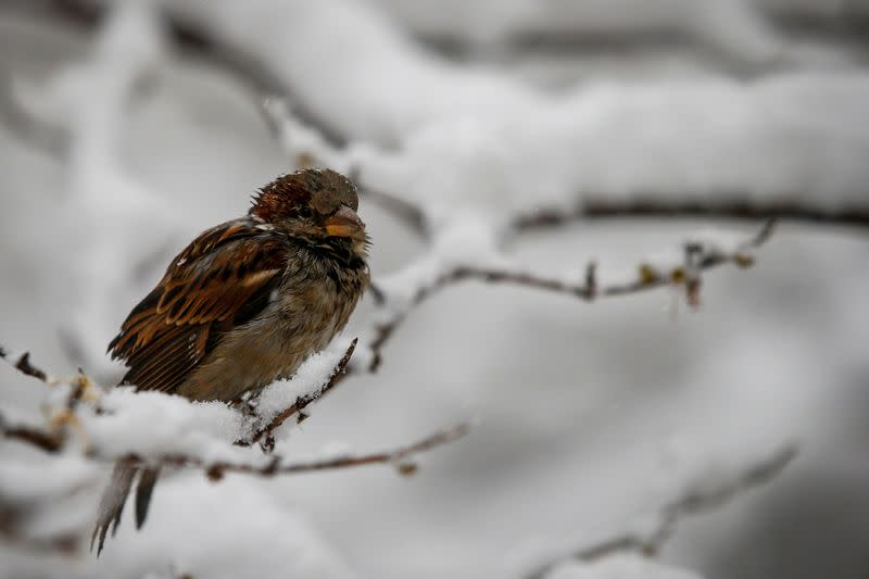 Climate change could be making birds shrink in size, study finds