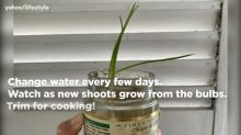 How to re-grow spring onions at home