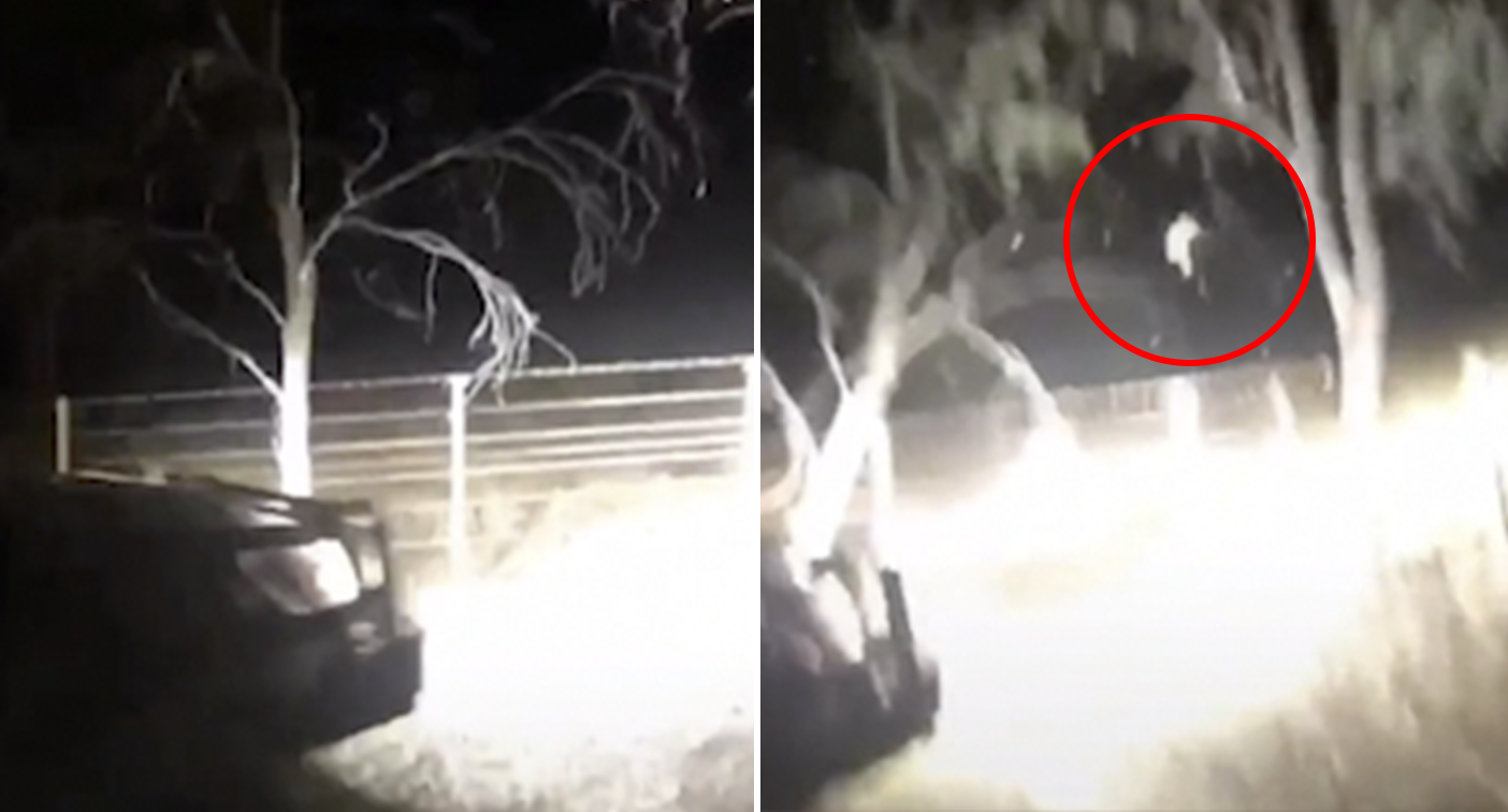 TikTok user laughs as he rams possum out of tree with ute