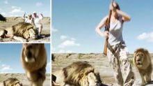 ¿Fake o real? Un león ataca a dos cazadores que han matado a su compañero
