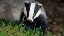 Badger cull tracker's home targeted with graffiti by activists who endlessly harassed him with 'telephone terrorism'