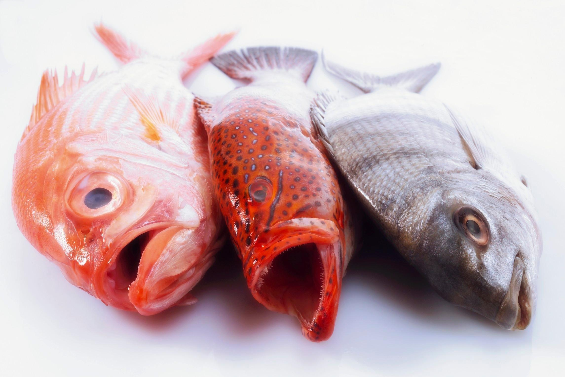 You can buy good fish at the supermarket for Fish to buy