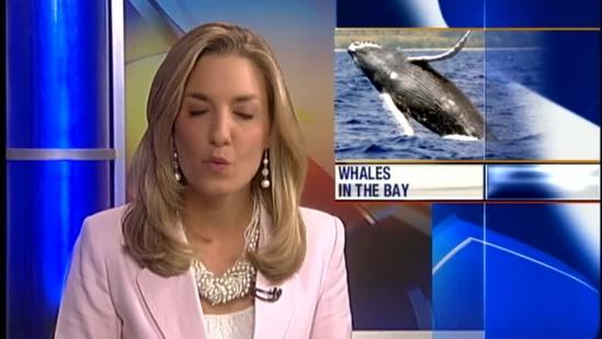 Whales taking over the Monterey Bay