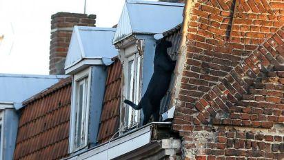 Armentières : une panthère noire se balade sur les toits