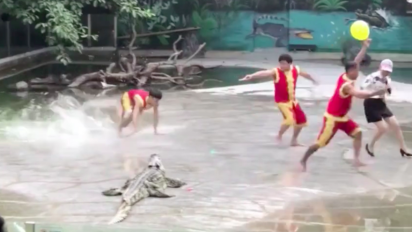 Croc show goes wrong - but not how you'd think