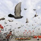 Even pigeons are banned from flying for China's 70th birthday