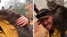 A firefighter rescued a cat from the Paradise fire and she won't leave him alone