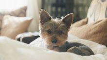 5 objetos del hogar que podrían lastimar a tu perro