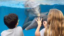 Esta niña consigue comunicarse con los delfines gracias a un sencillo truco