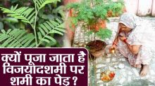 Importance of Shami Leaves & its Worship during Dussehra