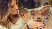 Nada de cães, a onda entre animais de estimação agora é o porco