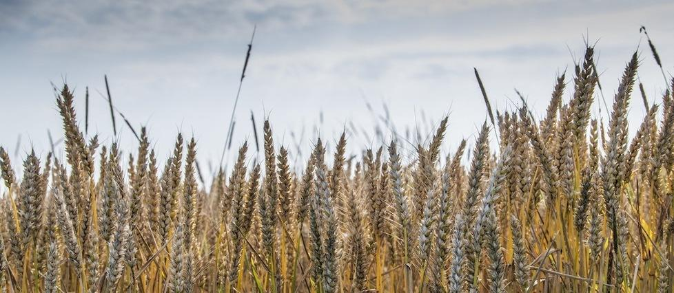 L'inquiétante flambée des prix des denrées agricoles