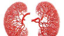 ¿Cómo funcionan los riñones?