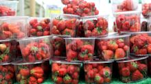 Supermarket sneak: bruised strawberries placed in punnets in war against food waste