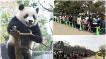 日本「上野動物園」超長人龍 排隊朝聖睇熊貓B