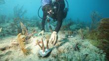 Canon Participates in the University of Miami's Coral Reef Restoration Project