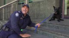Adorable Police Puppy Terrified of Stairs