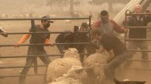 As death toll mounts, volunteers brave Oregon wildfires to rescue stranded livestock