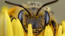 Beekeepers Petition Court To Block EPA Approval Of Bee-Killing Insecticide